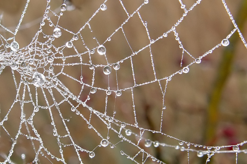 Misty Morning Pearls