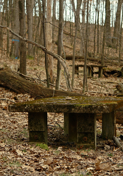 concrete tables in the woods<br>by Tessa HD Campbell