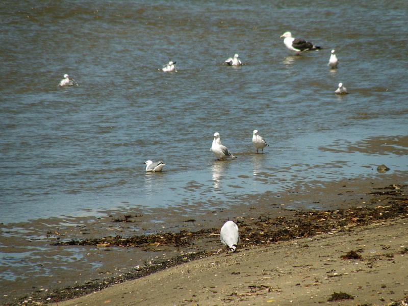 Browns Bay 2.jpg
