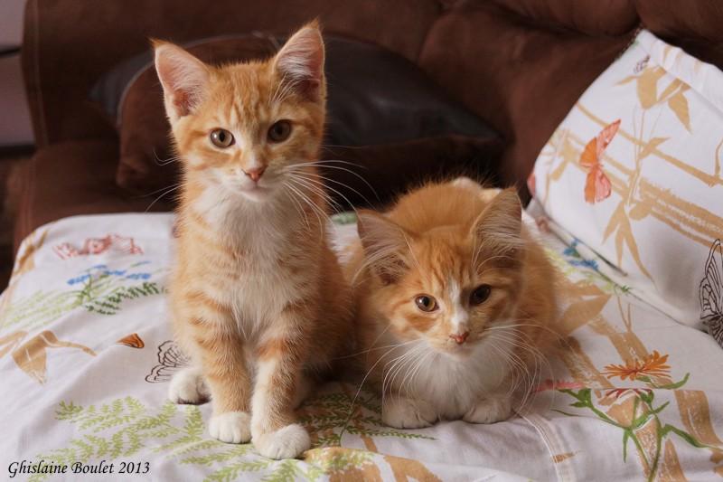 Ginger et Milly