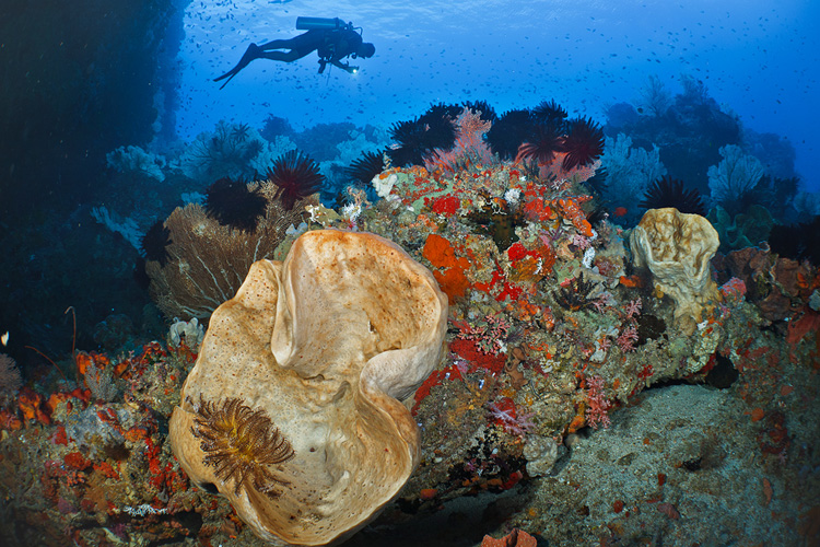 Kota Pintu Reefscape