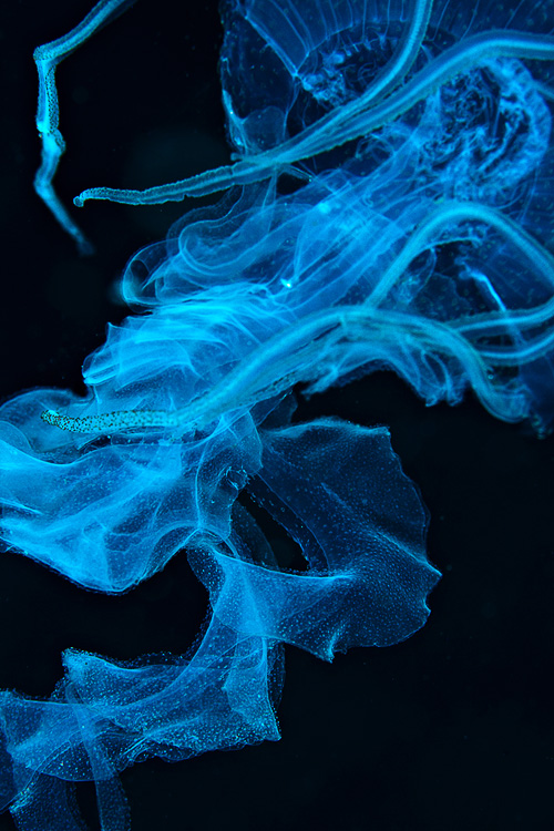 Jellyfish or ciggie smoke