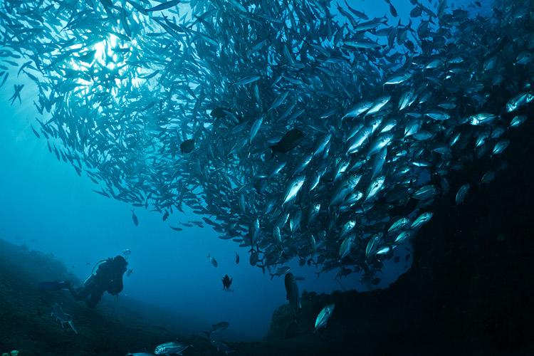 Jackfish in Tulamben