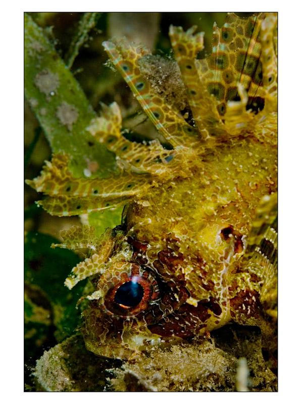 Nacala scorpion profile