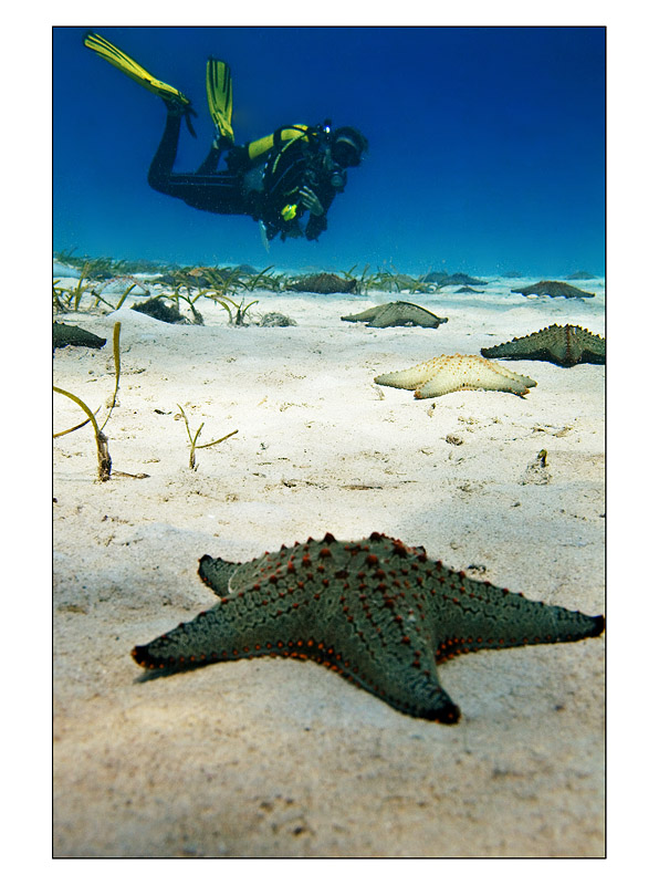Sarah from Bay Diving and the Starfish