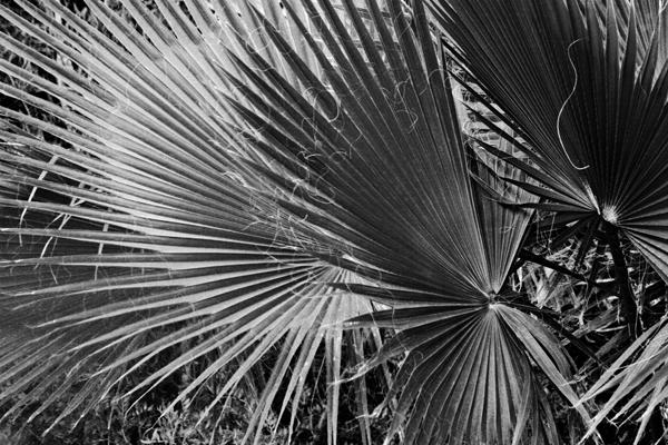Palm_Ibiza_5316.jpg