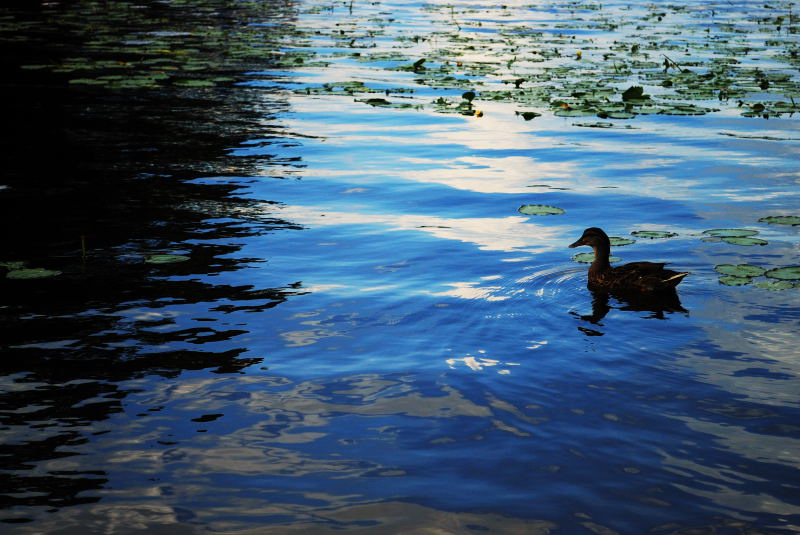 Lake Gladewater, 9-30-2008 (#2)