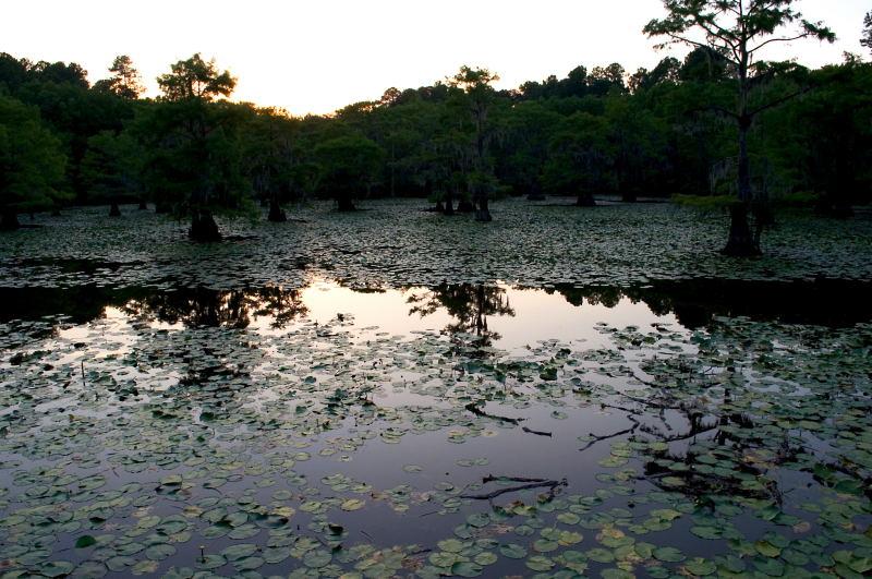 Caddo Lake, 07-05-2010