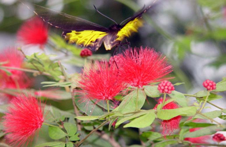 Butterfly Museum, Keywest, Florida.