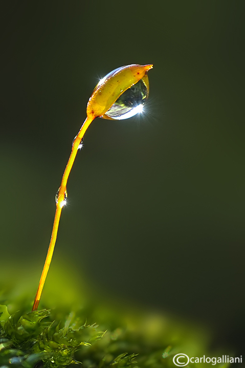 Moss & drop