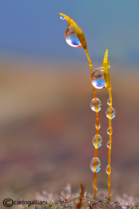 Moss and drops