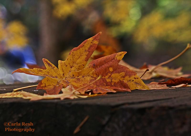 Table leaf