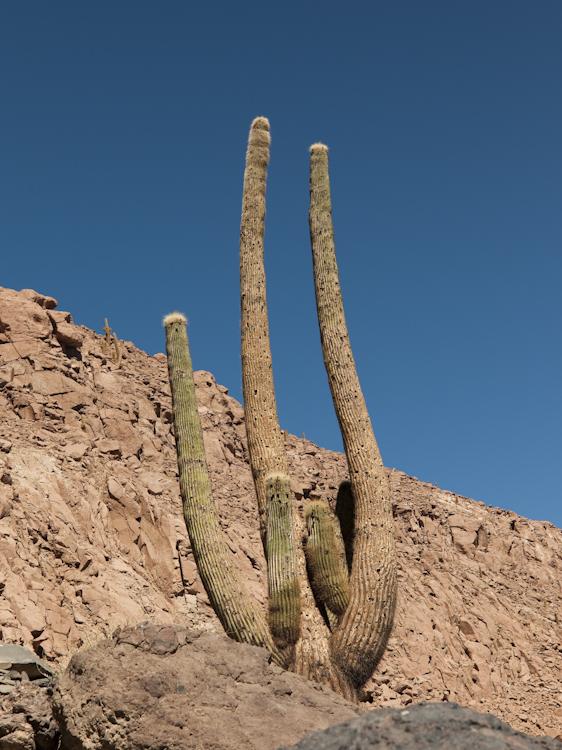 W-2009-08-19 -1361- Atacama - Alain Trinckvel.jpg