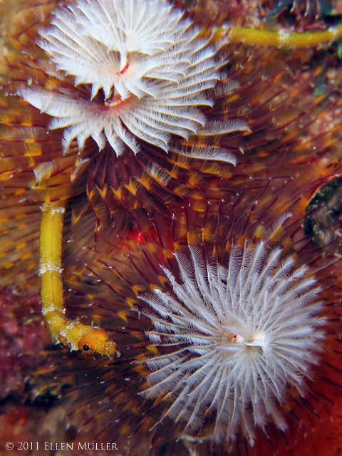 Pipefish & Worms