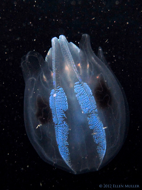 Jelly in Outer Space