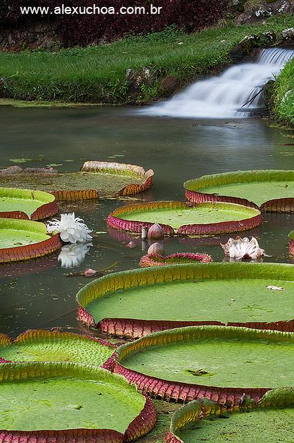 Jardim Botanico, Rio de Janeiro 9678.jpg