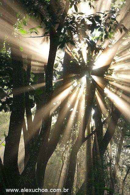 Floresta da Tijuca, Rio de Janeiro 0013