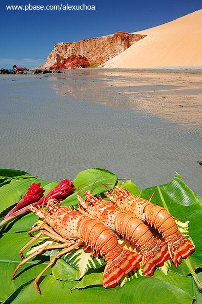 Lagostas na praia de Ponta Grossa, Icapuí_3921