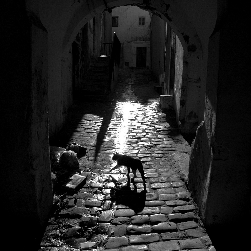 Cat - Medina of Tunis