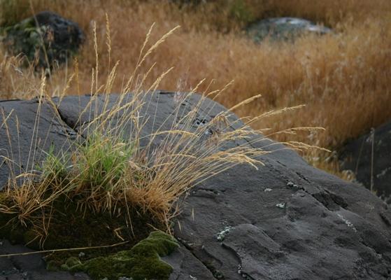 Some of it <i>isnt</i> cheatgrass