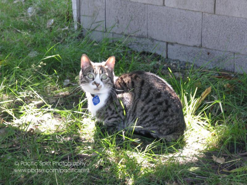 A smart Laurel Street cat whos found the best spot