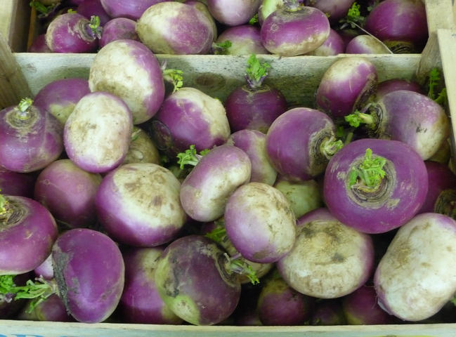 Speiserüben / white turnips / navets