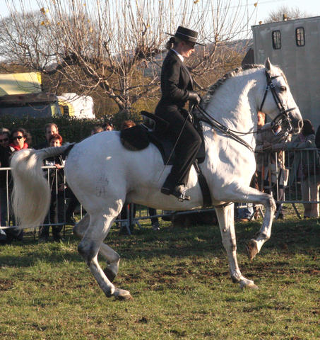 Hohe Schule / classical dressage