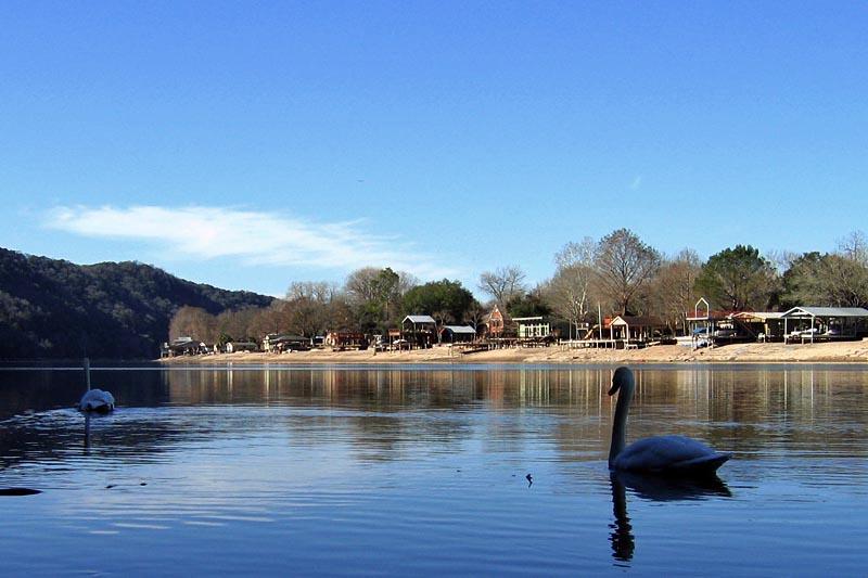 Swans Away
