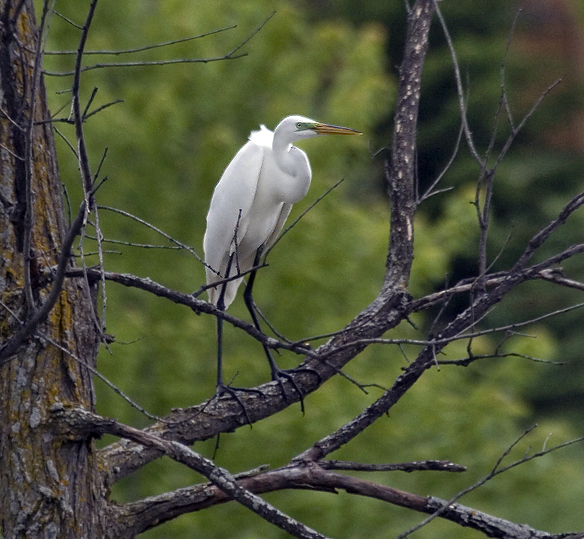 greategret12.jpg