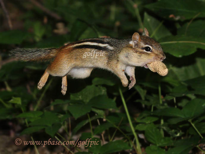 How fast can a peanut travel?