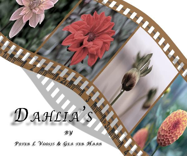 Dahlis. from the Netherland 2