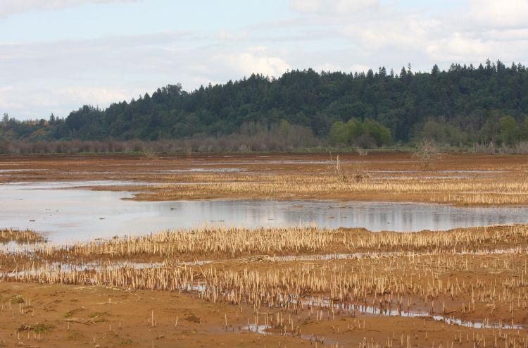 Nisqually River Delta