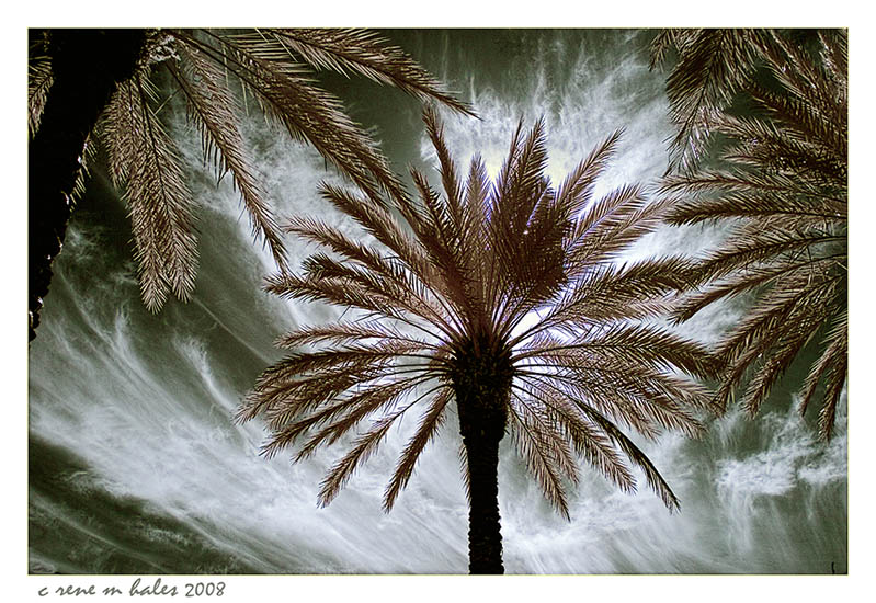 among the palms