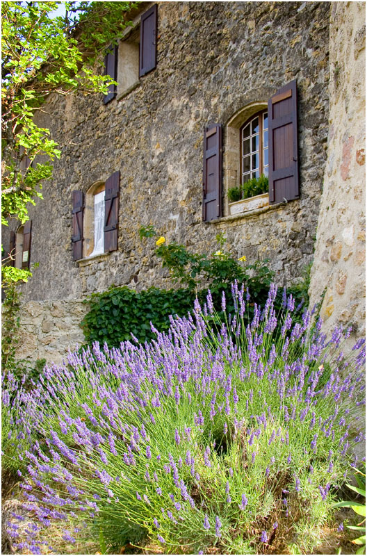 House of Lavender