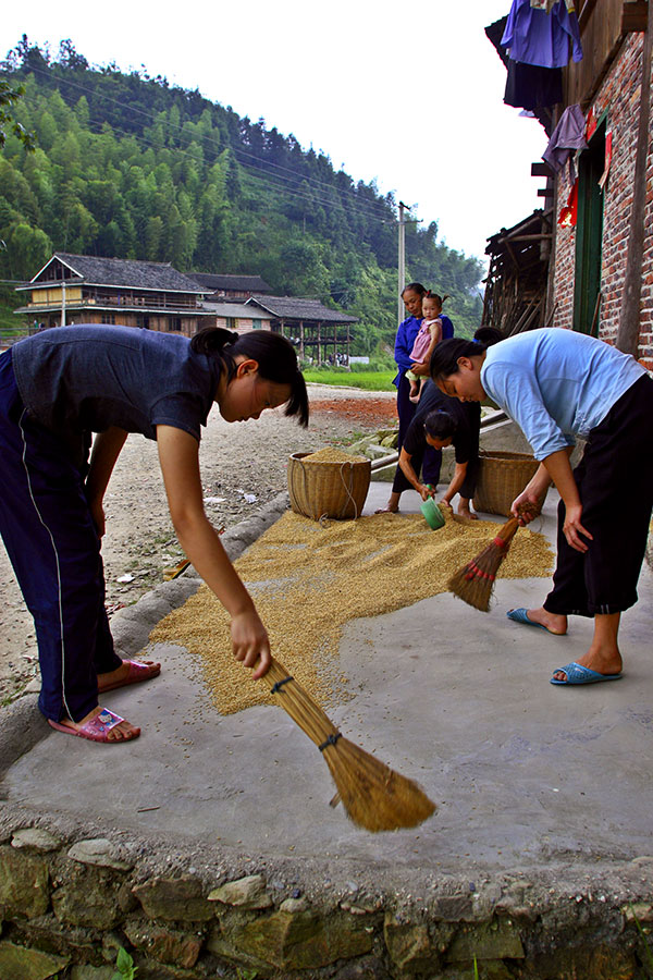 1120 Sweeping up dried rice. ***Explanation***