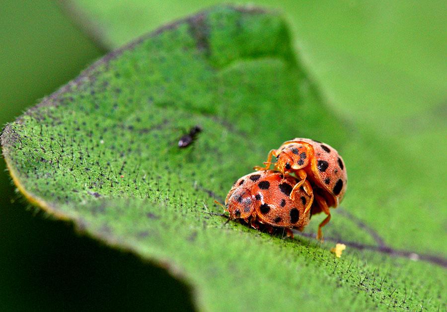 3561 Order: Coleoptera