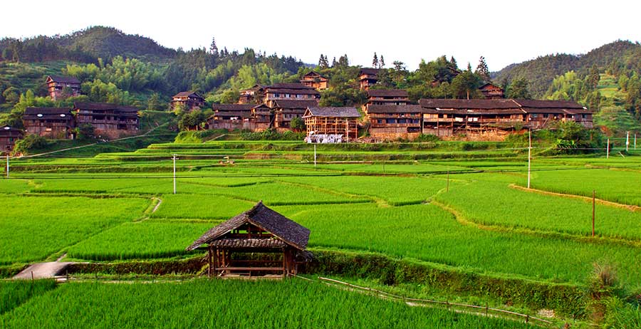 0463 Looking at northern section of village across rice paddies.