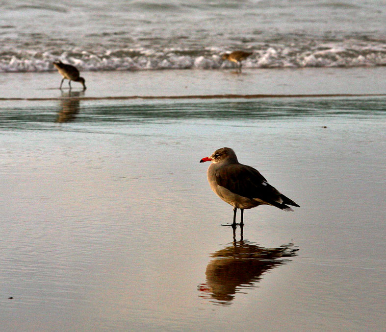 Shore bird.