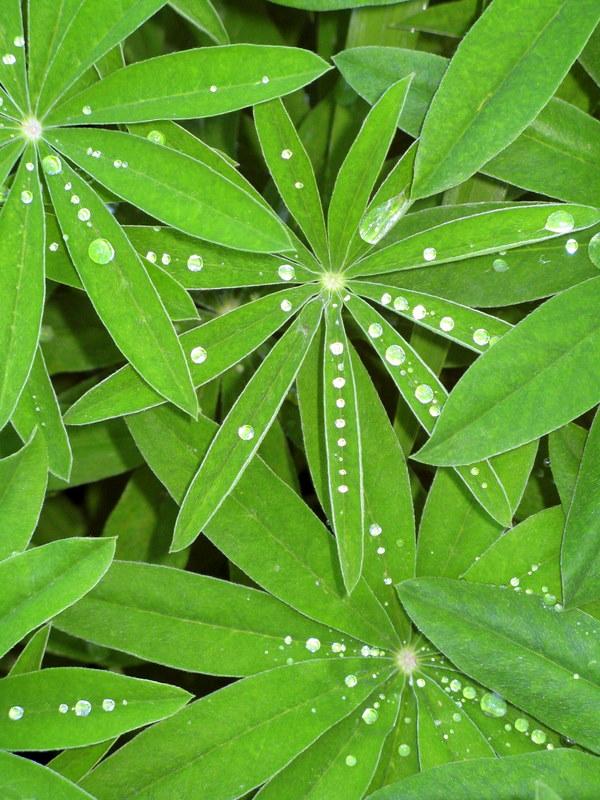 Glistening Dewdrops