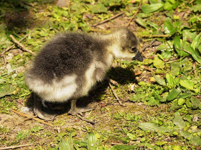 There Once Was An Ugly Duckling