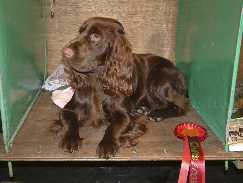 Best Puppy Dog, Crufts 2003