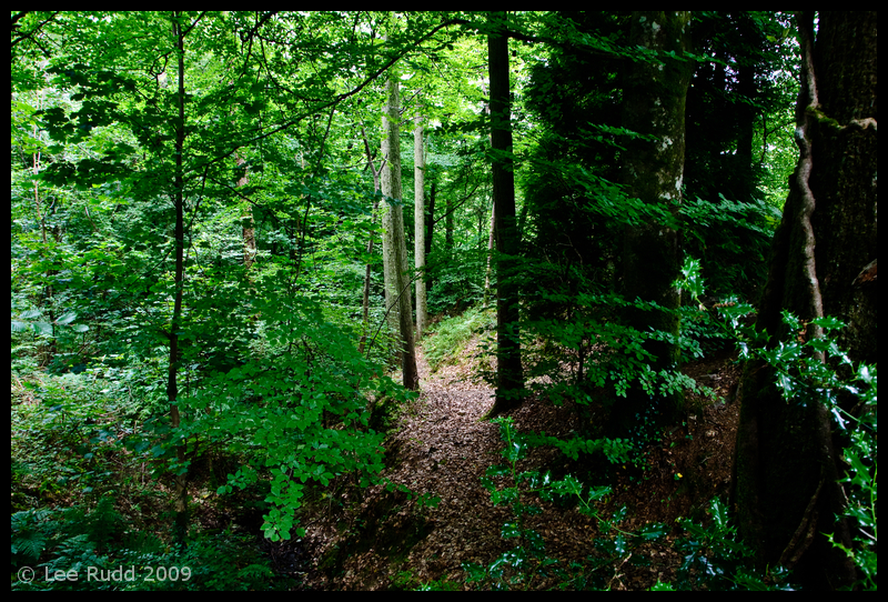 Woodland Clearing
