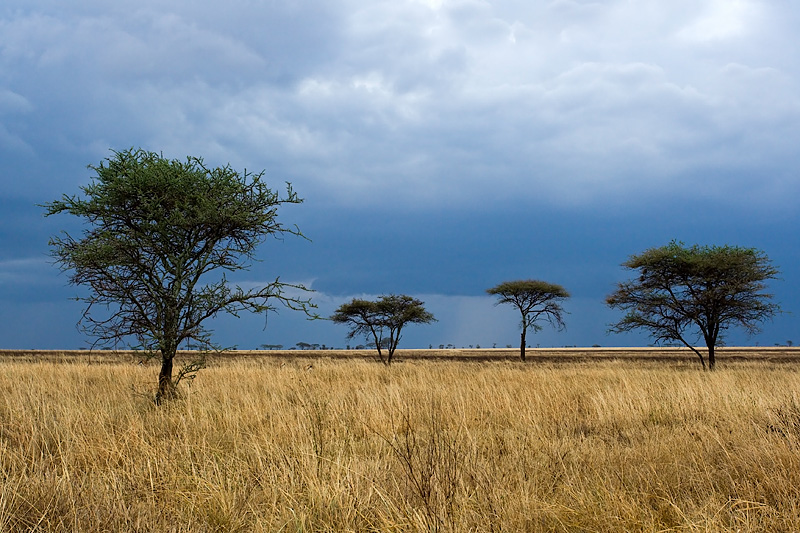 Serengeti Before Rain