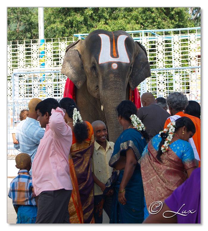 Elephant with Namamon its forehead