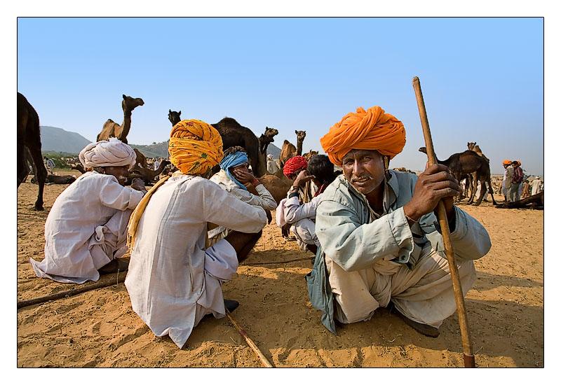 Camel Trader 20