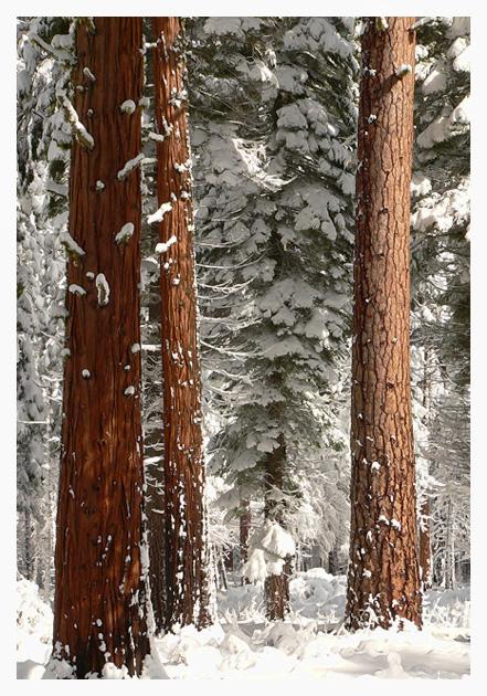 Sierra Mountains, California