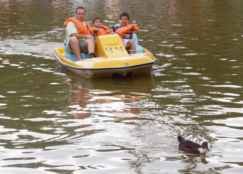 Pedal boats for hire
