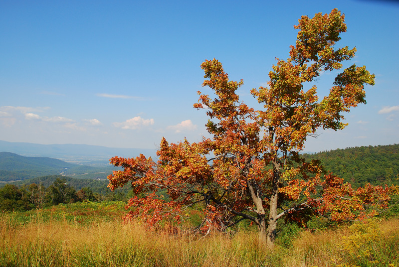 From Skyline Drive