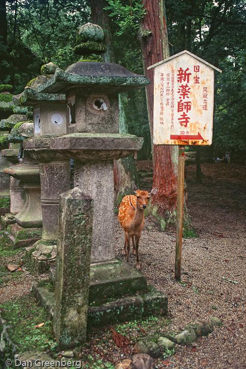 Deer and Stone Lanterns