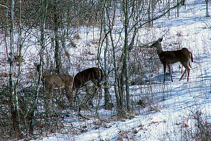 ...and see a herd of at least 12 deer